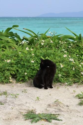 1日 コンドイビーチのネコ.JPG
