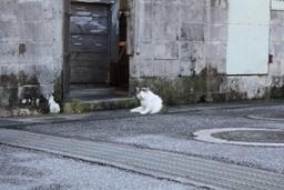 きしもと食堂 近所のネコちゃん.JPG