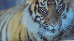 虎1.jpg